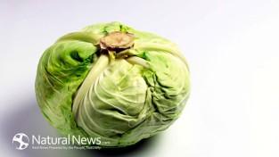 green-cabbage-head-650x
